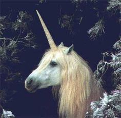 Unicorns would be as common as a horse