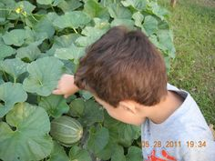 Heirloom Melons Make A Teaching Garden In Texas | Natural Family Today