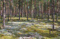 Olika skogstyper