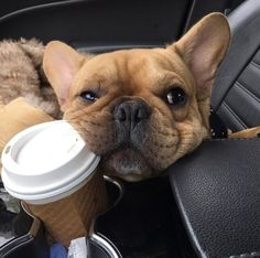 Así termina mi domingo= paseo en  dulce compañía   #adorable #coffee #paseodedomingo #merienda #sunday #weekend #amorporlosanimales #love #animals #my #dog #relax #butfirstcoffee #instagood #instadaily #instalike #food #yummy #car #cars #fashion #perfect #amazing #day #pet #photooftheday #bestoftheday #moda #chic