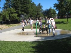 Kids and Dogs cool off