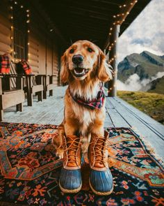 Golden retriever puppy dog wearing a plaid scarf and boots. Cute Puppies, Cute Dogs, Dogs And Puppies, Doggies, Corgi Puppies, Animals And Pets, Baby Animals, Cute Animals, Nature Animals