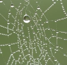 The only thing I find more disturbing than a spider in its web, is an empty web.