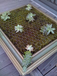 Fabulous tutorial by Luna-See, on how to make a framed succulent garden wall hanging(Diy Garden Wall) Succulent Frame, Vertical Succulent Gardens, Hanging Succulents, Succulent Gardening, Succulents Garden, Organic Gardening, Succulent Garden Ideas, Hanging Plants, Succulent Planters