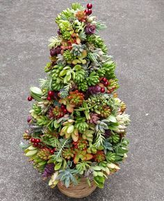 Though nothing can quite replace a classic balsam or Douglas fir, we can't help but obsess over succulent Christmas trees, which are currently taking over Succulent Tree, Succulent Gardening, Succulent Terrarium, Succulent Ideas, Cacti Garden, Indoor Gardening, Colorful Succulents, Planting Succulents, Christmas Plants