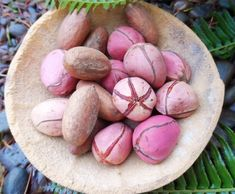 14 Best kola nuts images in 2016 | Chinua achebe, Nut