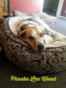 . Update on Phoebe's Journey with cancer. Phoebe in her new bed.intelligentdomestications.com