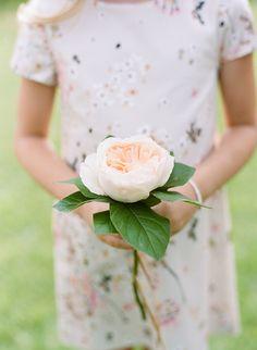 Single-Flower Garden Rose Bridesmaid Bouquet   Brides.com