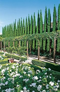 Federico Fourquet designed the garden with its avenue of cypress and lemon trees, box hedges and parterres of roses. Photo by Christopher Si. Formal Gardens, Outdoor Gardens, Landscape Design, Garden Design, Toscana Italia, Italian Garden, Italian Summer, Cypress Trees, Traditional Landscape