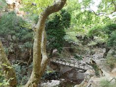 You Must Explore Patsos Gorge in Crete Greece