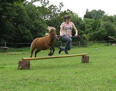 """Rachel Ralph from Ngaruawahia wins with """"Up & Over!"""". Rachel says Benji is their miniature and one of their team at Hope Rising Farm Charitable Trust, where kids in foster care can have fun with and learn from our horses and donkeys. Countrified fun and games! Excellent initiative and excellent photo!"""