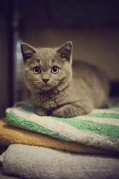 I'm going to have a grey cat. And I will name it Tweed. Grey cats are so darn rad!