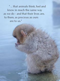 Cute Baby Animals, Animals And Pets, Funny Animals, Strange Animals, Beautiful Creatures, Animals Beautiful, Mon Combat, Stop Animal Cruelty, My Animal
