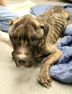 Emaciated dog discovered during drug dealer arrests