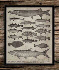 Vintage breeds of fish fishing poster fishing by UniquelyGiftedArt