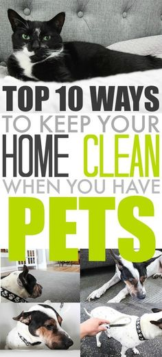 Tips and Ideas for keeping your home a little bit cleaner when you have pets! Always a challenge!