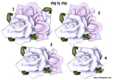 beautiful roses ste by step