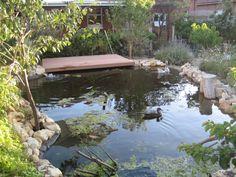 Aquaponic goose pond