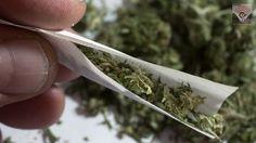 #VoxPopuli Ahora México tiene oportunidades de mercado para la mariguana medicinal. Los datos de ventas de mariguana en Estados Unidos tuvieron un crecimiento de 30%, algo nunca antes visto, en 2016, que representó unos 6.7 mil millones de dólares, según un nuevo informe por Estudios del mercado Arcview Market Research. Como un ejemplo, HempMeds México es una subsidiaria de Medical Marijuana, Inc., la primera compañía comercializadora de cannabis que cotiza en bolsa (MJNA).