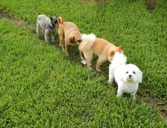 Canine friendship at the Florida DPC!