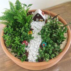 Succulent Gardening, Garden Terrarium, Cacti And Succulents, Planting Succulents, Container Gardening, Dish Garden, Cactus Y Suculentas, Miniature Fairy Gardens, Garden Design