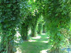 fransk trädgård 8 Portal klädd med humle