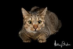 Pepper - Pet Photography - Studio Pets - Cat Photography
