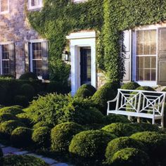 Boxwood, creeping fig, bench, black door... awesome!