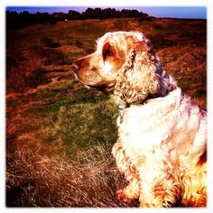 Wonder Dog in Wonder Nature 2 - now with hipstamatic filter