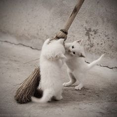 It's your turn to clean!