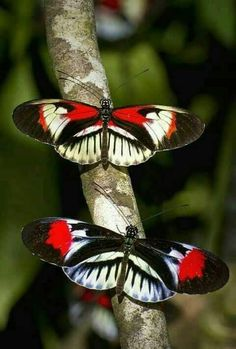 Piano Key Butterflies 15 Beautiful Butterfly Photos Added to Gallery and Here's a Sample Art Papillon, Papillon Butterfly, Butterfly Kisses, Butterfly Flowers, Butterfly Wings, Vintage Butterfly, Beautiful Bugs, Beautiful Butterflies, Beautiful Creatures