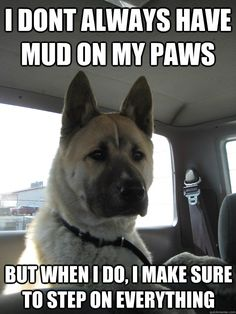 i don't always have mud on my paws but when i do i make sure to step on everything