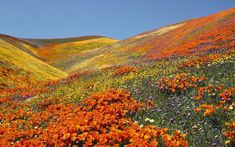 BEAUTIFUL PHOTOS OF FLOWER FIELDS |