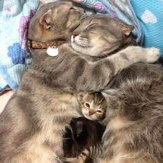 #cats #love