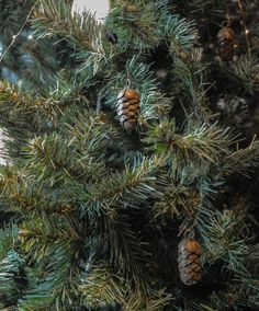 Burnished brass coloured fir cones - decorations from Natural Bed Company Pine Cone Tree, Pine Cone Christmas Tree, Christmas Tree Decorations Sets, Fir Cones, Bed Company, Christmas Bedroom, Brass Color, Natural Looks, Bedroom Decor