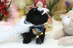 ♥Teacup Poodle♥Toy Poodle♥Pocket Poodle♥  Date of Birth:2013/12/16 Color:Black Gender:Male Size:Big Teacup-Toy Teacup Poodle Estimated Adult Weight: around 2-2.5kg (4.4-5.5lb) Vaccination:2  Price: please contact for price quotes  ♥Teacup Poodle♥Toy Poodle♥Pocket Poodle♥  YouLong Poodle Breeding Center http://52993344.com/en/  Poodleholics Please Contact  Cell: +886-975785398 Line ID : teddymommy75 Whatsapp : +886975785398 QQ: 603042543 SKYPE: teddy52999 Email: a5299.a3344@msa.hinet.net