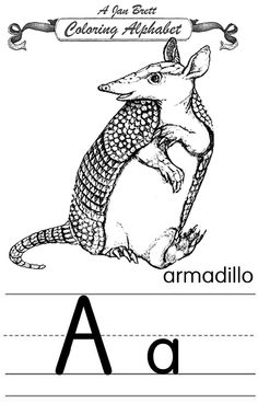 coloring alphabet traditional armadillo