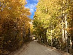 Yes, you CAN see great fall foliage here in California - you just have to know when - and where - to look. Here are some great trails to get started.