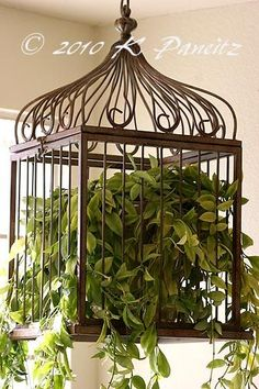 Beautiful Bird Cage Ideas for Your Garden. Beautiful Bird Cage Ideas for Your Garden. Of course the cage to be built must be adjusted to the house or garden building, so that the overall aesthe. Indoor Garden, Indoor Plants, Outdoor Gardens, Balcony Garden, Hanging Bird Cage, Hanging Plants, Birdcage Planter, Birdcage Decor, Wooden Bird