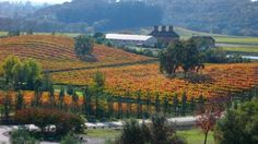 Russian River Valley... fall colors, full wine glasses...need I say more?