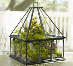 Tabletop Greenhouse terrarium, love the shape of this