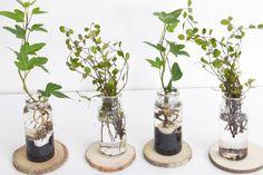 귀여운 수경재배식물