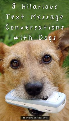If dogs could text, THIS is what they'd say http://theilovedogssite.com/if-dogs-could-text-message-this-is-what-theyd-say/