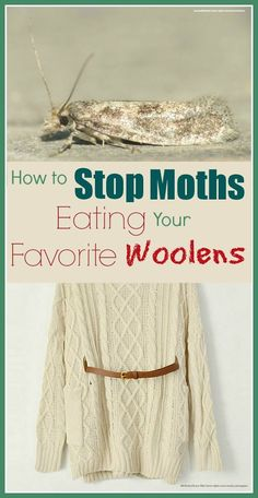 How To Get Rid Of And Prevent Moths In Closets Using Cedar Oil With Images Cedar Oil Moths In Closet Moth Repellent
