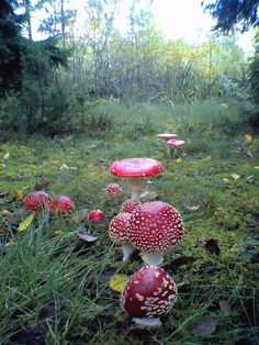 Magical looking toad stools