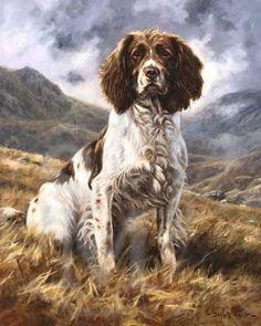 A great dog(springer spaniel) Artist: John Trickett