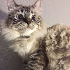 Spotted something! Hunt mode engaged   cats funny pictures