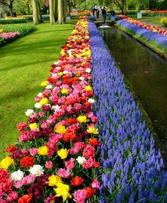 The Magic Carpet Tulip Mixture - Modern Garden Front Of House, Lawn And Garden, Home Landscaping, Front Yard Landscaping, Beautiful Flowers Garden, Beautiful Gardens, Flower Garden Design, Flower Bed Designs, Tulips Garden