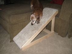 Dog ramp...something like this for the pool...