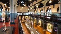 Hunterian Museum The Oldest Museum in Scotland…